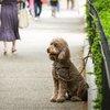 Carroll - Dog near Rittenhouse Square