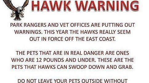 Toms River Hawks Dogs