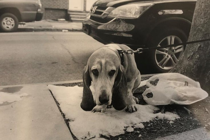 Poopface: Dogs of Philadelphia