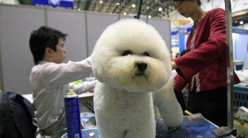 04242015_Dogs_AP