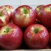 Pennsylvania Apples