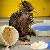 04242015_Bird_AP