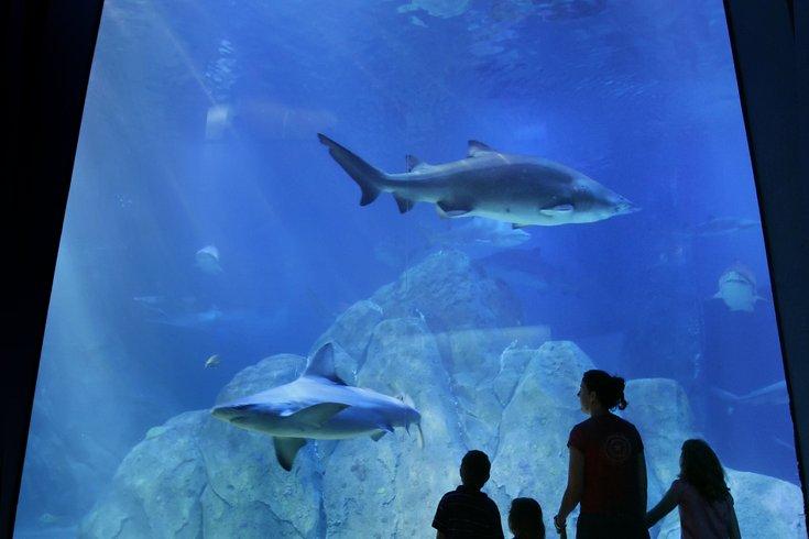 Yoga Day At Adventure Aquarium Phillyvoice