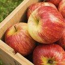 10072015_Apples