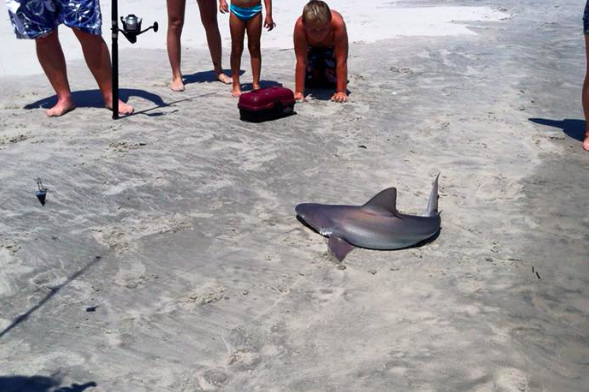 Baby shark reeled in by teen fishing in wildwood phillyvoice for Fishing wildwood nj