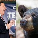 Christie Bears