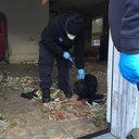 Bergen Dog Rescue