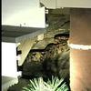 101815_BoaConstrictor