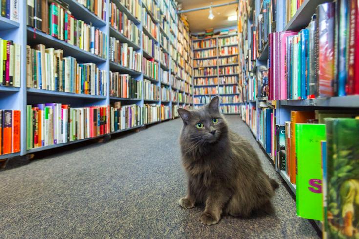 Cat in a bookstore