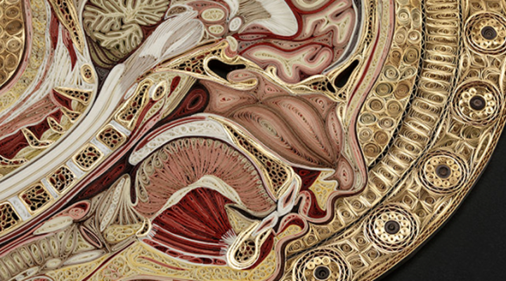 Connective Tissue Exhibit at Mutter Museum