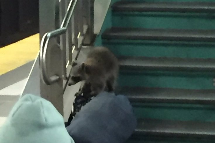 PATCO Raccoon