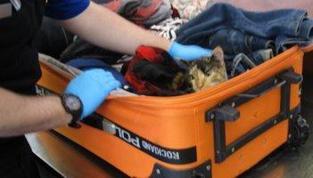 Cat Erie Airport