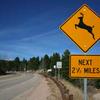 092816_Deervideo