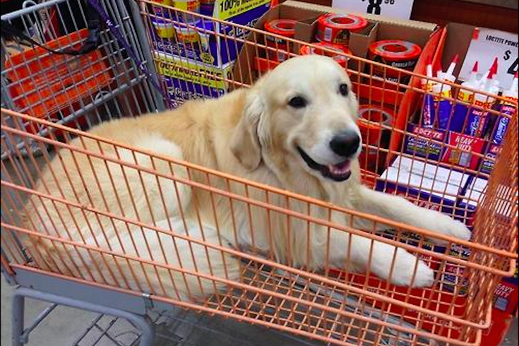 Can Dogs Go Into Lowes