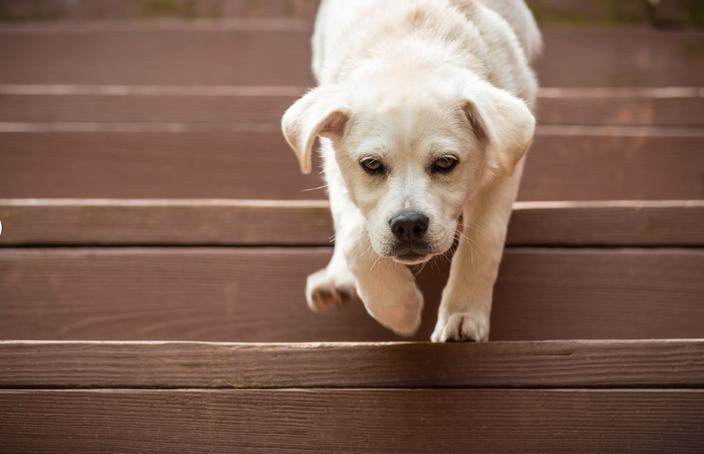 Dog Agility Training Philadelphia | toilet training dog problems