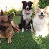 01122015_Dogs_Facebook