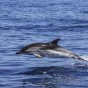 080515_dolphin