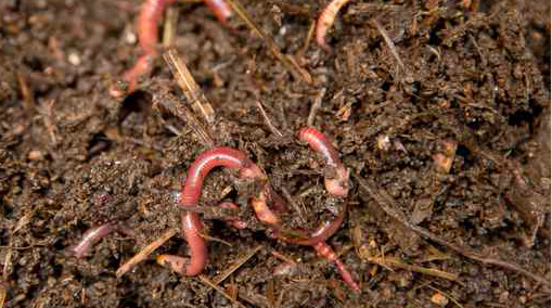 020717_earthworms