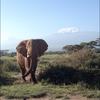 03162015_ElephantKili