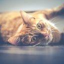 11302015_Cat
