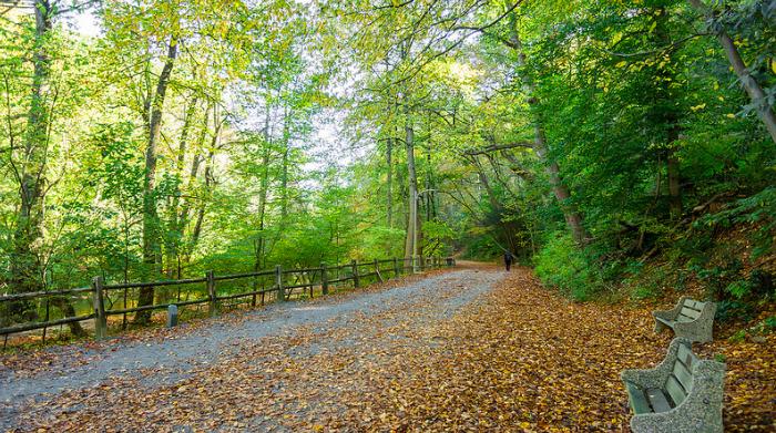 Forbidden Drive Trail