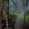 062216_Forestfirebase
