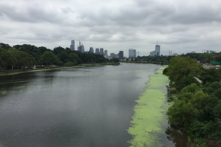 What are those unsightly green splotches in the Schuylkill River ...