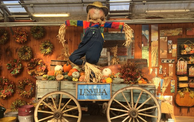 Fall at Linvilla Orchards