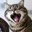 070516_Cat-Photo