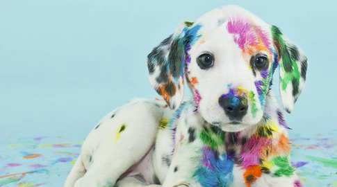 Dog with paint