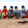 02132015_Penguins