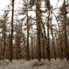 090915_PineBarrens
