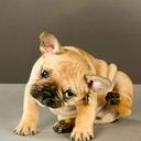 051816_PuppyUber