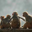 071215_monkeys