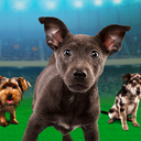 Puppy Bowl XI: Team Ruff vs. Team Fluff