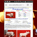 Starbullies