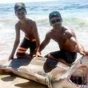 LBI Shark