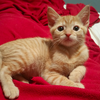 Kitten 'Bitz' ready for adoption