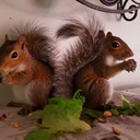 011516_SquirrelMomNJ