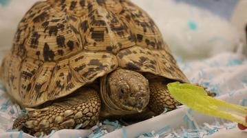 Totally Turtles Weekend