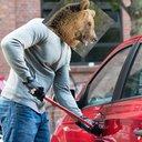 Bear breaking into car
