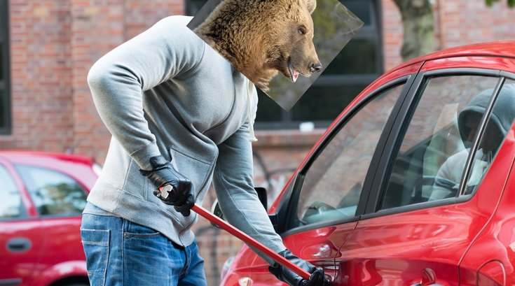 Bear breaking into car