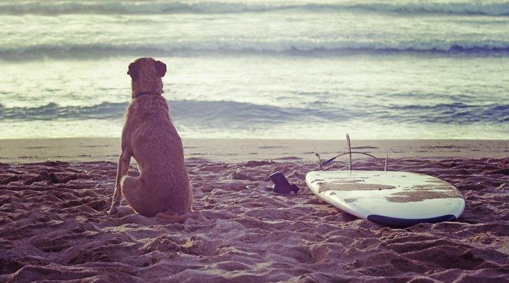 ocean city dog beach