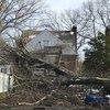 Fallen tree in Abington Township