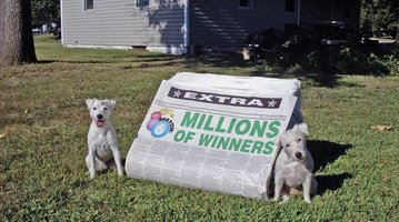 Animal Actors PA Lottery