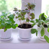 052315_plants
