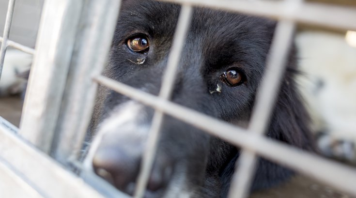 Animal Cruelty Abuse Dog
