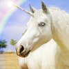 Unicorn etymology