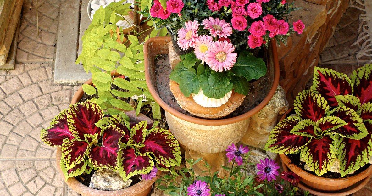 Barnes Foundation to host plant sale at arboretum ...
