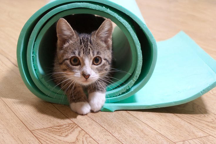 Kitten in yoga mat